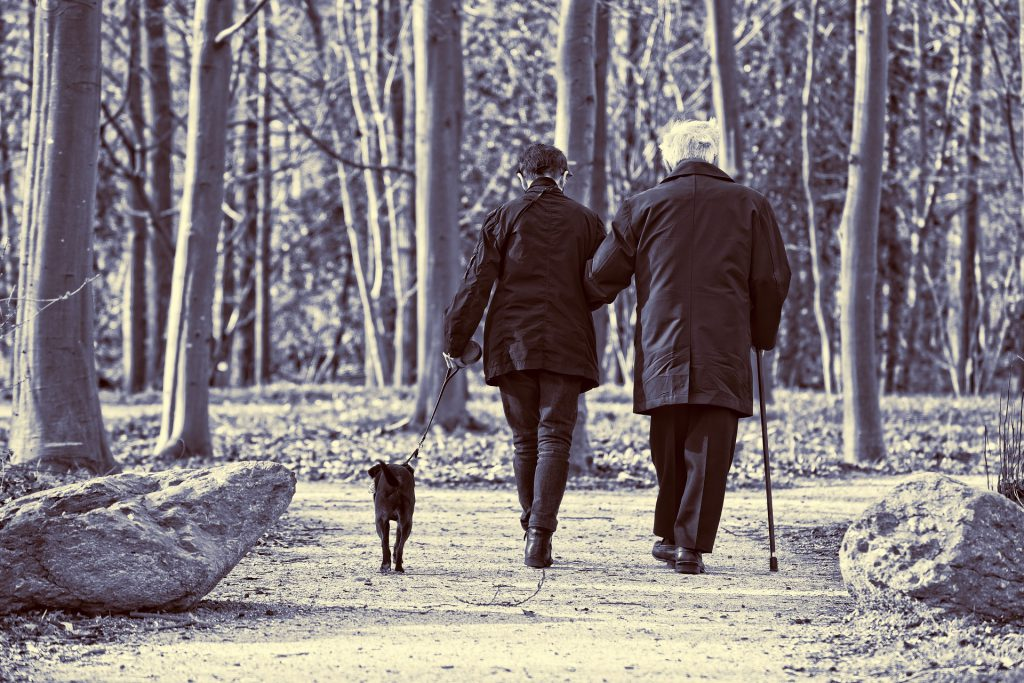 הליכה עם הכלב