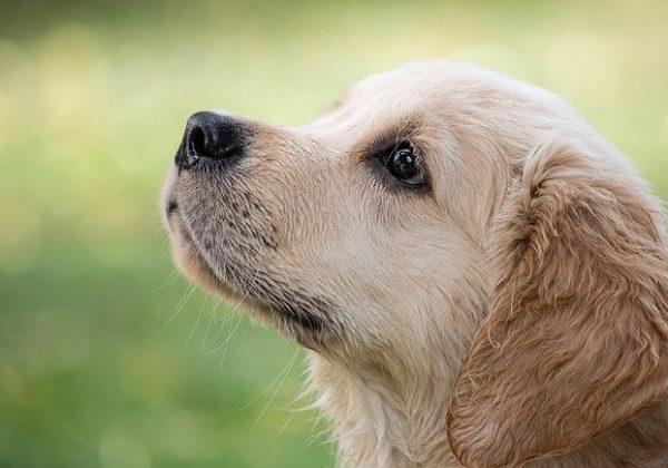 כלבים לקשישים: המדריך לאימוץ הכלב המתאים